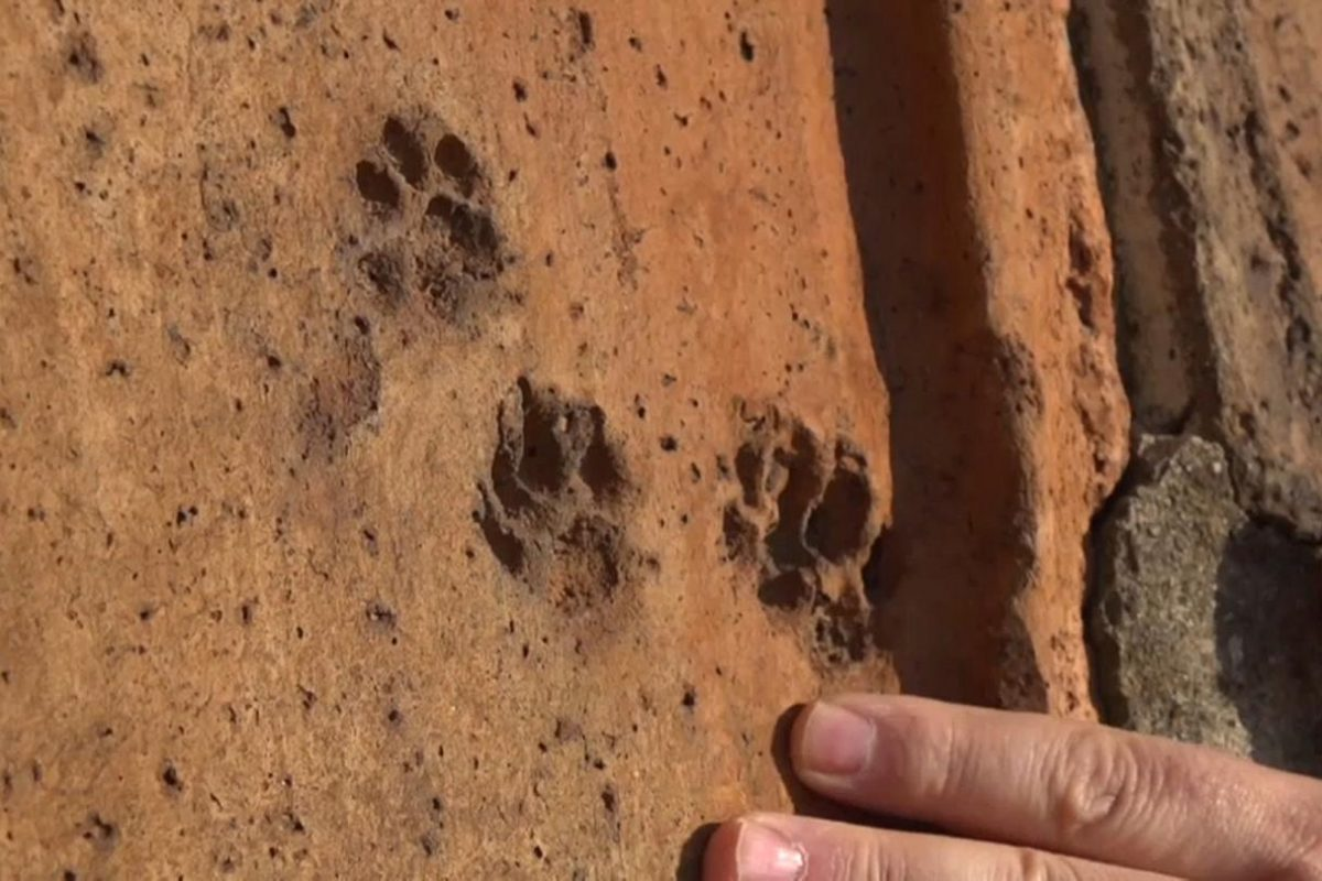 Animal tracks on the dome of Florence Cathedral